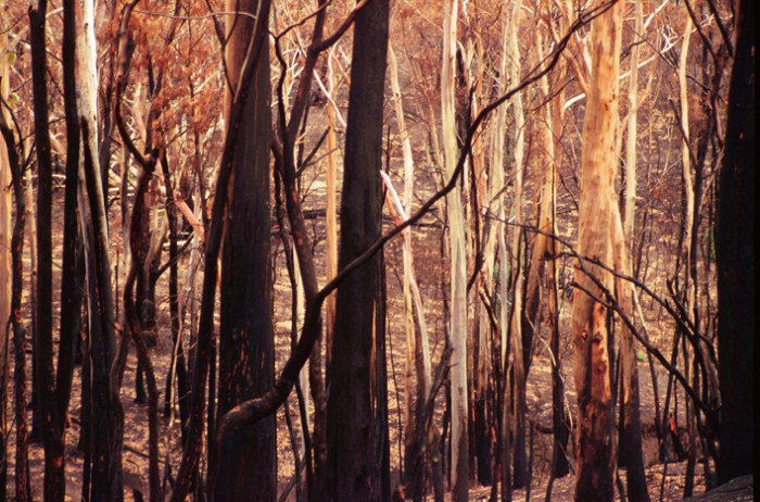 Australian Bushland Drawings of The Australian Bush And