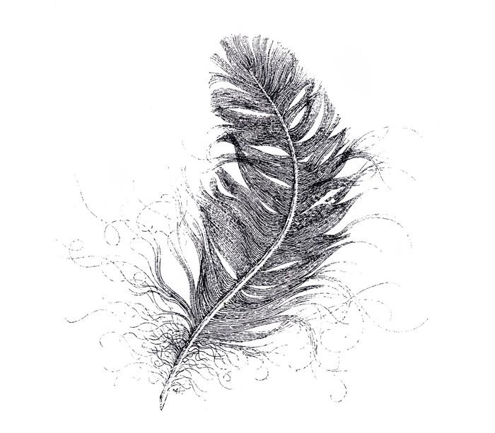 Feather Sketch | Matthew Harding